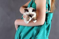 Девушка с котом Стоковое фото RF
