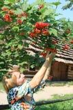 Девушка с красным guelder-Розой кроме сельского дома Стоковое Изображение RF