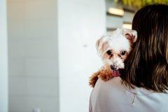 Девушка с меньшей собакой на ее плече, концепции приятельства вида сзади стоковое изображение rf