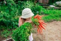 Девушка с пуком свеже морковей Стоковое Изображение RF
