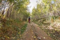 Девушка с рюкзаком идя вдоль дороги в лесе осени Стоковые Фото