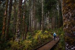 Девушка с собакой в лесе Стоковое фото RF
