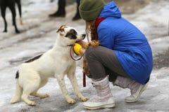 Девушка с собакой в парке зимы Стоковая Фотография RF