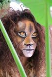 Девушка с стороной льва bodypaint Стоковая Фотография RF