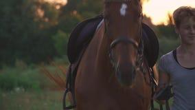 Девушка управляет лошадью на дороге поля сток-видео