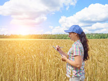 Девушка фермера в рубашке шотландки контролировала его пшеницу поля Стоковая Фотография RF
