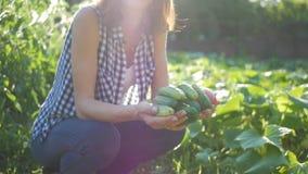Девушка фермера с овощами подрезывает в огороде вал времени земной хлебоуборки сада яблока возмужалый Фермеры семьи Концепция нат видеоматериал