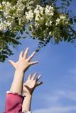 девушка цветка вручает немногую Стоковые Фото