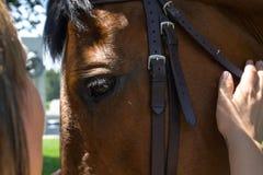 Девушка штрихует лошадь Лошадь животного копытного животного Стоковые Изображения