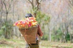 Девушка Hmong с платьем tradiyional с корзиной Стоковое фото RF
