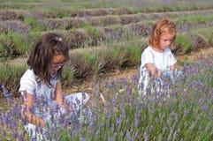 Девушки выбирая лаванду Стоковые Фотографии RF