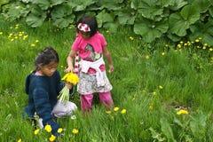 Девушки выбирая вверх цветут Стоковая Фотография
