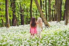 2 девушки идя весной лес Стоковая Фотография RF