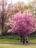 2 девушки идя за красивым цветя деревом весны Стоковое Фото