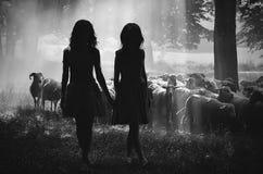 Девушки и овцы Стоковая Фотография