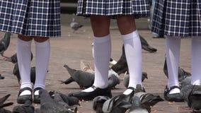 Девушки нося белые носки и голубей Стоковое Фото