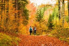 Девушки trekking в древесине Стоковое Изображение RF