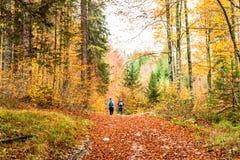 Девушки trekking в древесине Стоковые Изображения