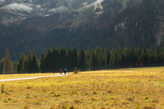 Девушки trekking в древесине Стоковая Фотография