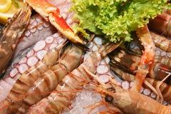 дегустация продуктов моря стоковые фотографии rf