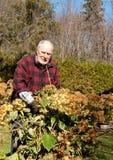 дед садовника счастливый стоковые фотографии rf