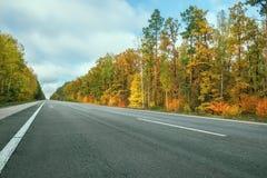 Дезертированная дорога асфальта среди леса осени яркого Стоковые Изображения RF