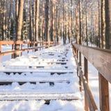 Дезертированная дорога в снежном лесе Стоковое Изображение