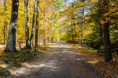 Дезертированная дорога леса в падении Стоковое Фото