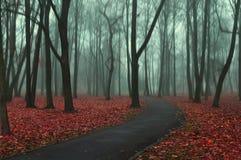 Дезертированная дорога в парке осени в туманной погоде Стоковые Изображения