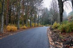 Дезертированная дорога в парке осени Стоковые Изображения