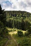 Дезертированная дорога к глубинам леса Стоковые Изображения