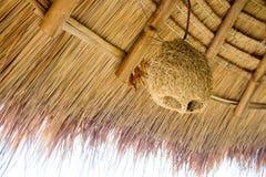 Дезертированный вид гнезда птицы на крыше травы для декоративного интерьера Стоковые Изображения