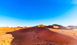 Дезертируйте ландшафт Сахары рядом с Mhamid в Марокко Стоковое Изображение