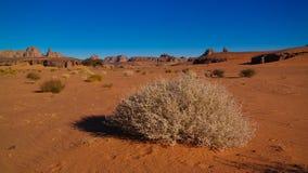 Дезертируйте ландшафт с акацией в долине Naga Moul на в национальном парке nAjjer Tassili в Алжире стоковые изображения rf