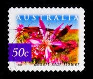 Дезертируйте цветок звезды - carinata Calytrix, природу serie Австралии, около 2002 Стоковое Изображение