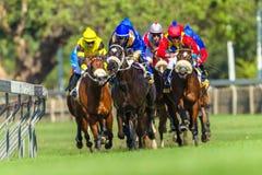 Действие лошадиных скачек идущее Стоковая Фотография