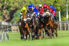 Действие лошадиных скачек идущее Стоковые Изображения