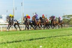 Действие лошадиных скачек идущее Стоковые Фотографии RF