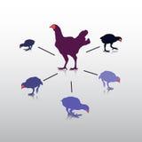 Действие цыпленка Стоковое Фото