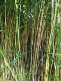 Действительно длинная трава стоковые изображения