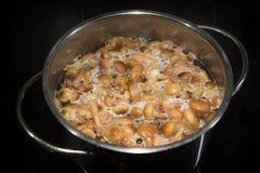 Декокт пластинчатого гриба меда Armillaria грибов Стоковая Фотография RF