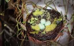 Декоративная запятнанная птица eggs в гнезде с мхом и лозами Стоковые Фото