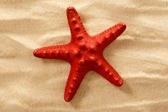 Декоративная звезда Красного Моря на песке Стоковые Изображения