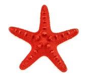 Декоративная звезда Красного Моря Стоковые Фото