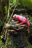 Декоративная керамическая лягушка в саде Стоковые Фотографии RF