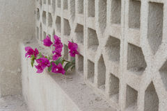 Декоративная конкретная загородка Стоковые Фотографии RF