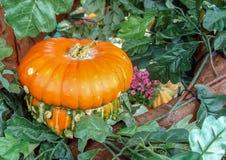 Декоративная оранжевая тыква в форме гриба стоковая фотография rf