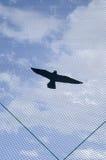 Декоративная пластичная хищная птица на загородке шоссе Стоковое Изображение RF