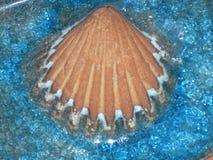 декоративная раковина моря Стоковое фото RF