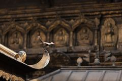 Декоративная символическая птица на пике буддийского виска Стоковые Фотографии RF